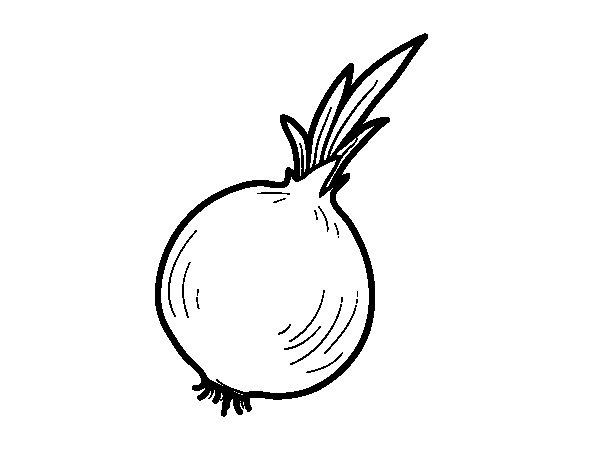 Dibujo de Cebolla ecolgica para Colorear  Dibujosnet