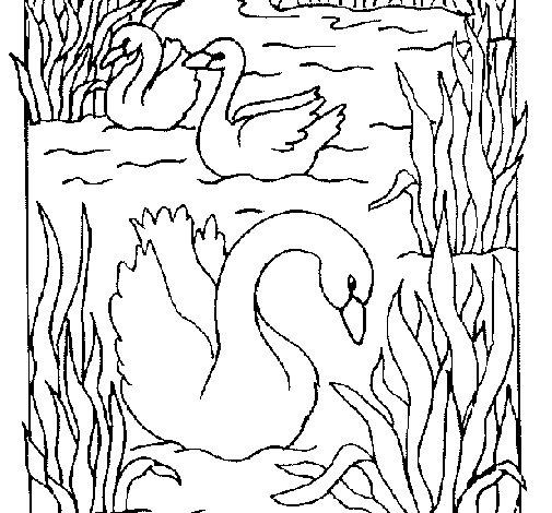 Dibujo de Cisnes para Colorear