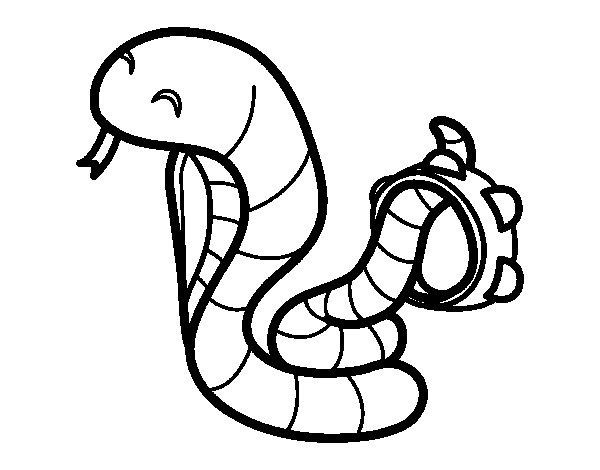 Dibujo de Cobra con pandereta para Colorear