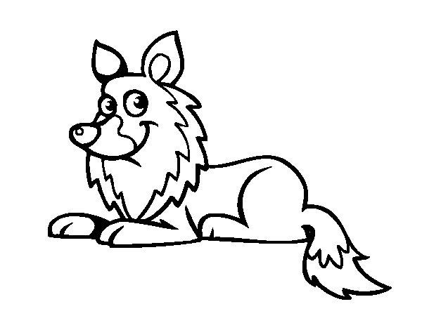 Dibujo de Collie para Colorear