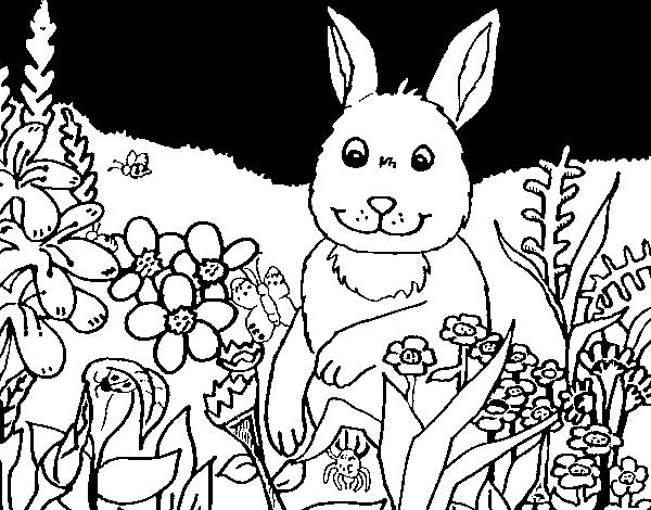 Dibujo de Conejito en el campo para Colorear  Dibujosnet