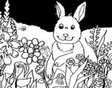 Dibujo de Conejito en el campo para colorear