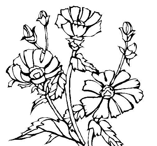 Dibujo de Conjunto floral para Colorear