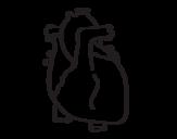 Dibujo de Corazón humano para colorear