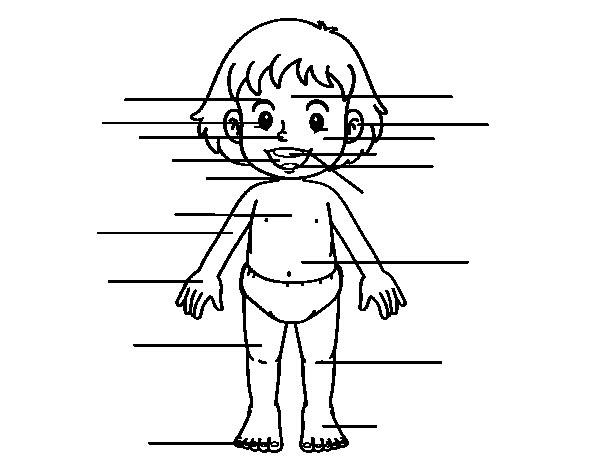 Corpo Bambino Da Colorare: Dibujo De Cuerpo De Frente Para Colorear
