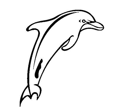 Dibujo de Delfín adulto para Colorear
