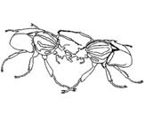 Dibujo de Escarabajos para colorear