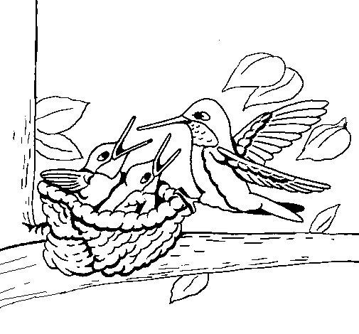 Dibujo de Familia colibrí para Colorear