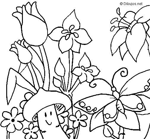 Dibujo de Fauna y flora para Colorear
