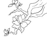 Dibujo de Flor de almendro para colorear