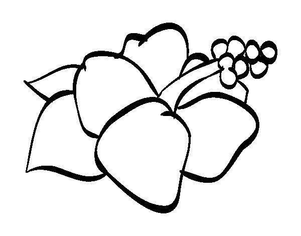 Dibujo de Flor de lagunaria para Colorear  Dibujosnet