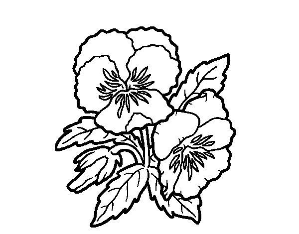 Dibujo de Flor de pensamiento para Colorear
