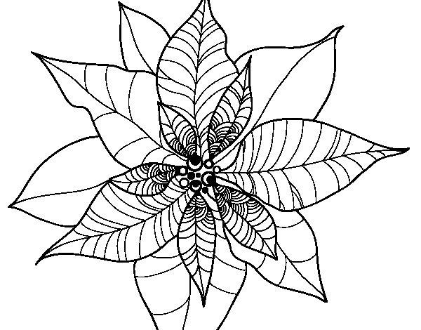 Dibujo de Flor de poinsetia para Colorear