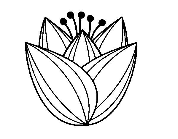 Dibujo De Flor De Cerezo Para Colorear: Dibujo De Flor De Tulipán Para Colorear