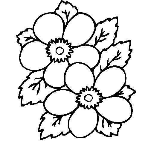 Worksheet. Dibujos De Flores  Bioinformatics RD