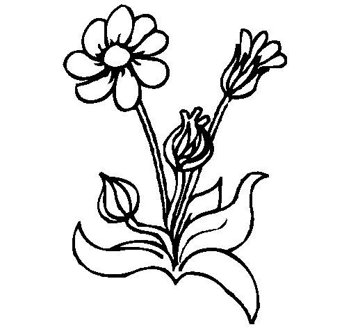Dibujo de Flores 2 para Colorear