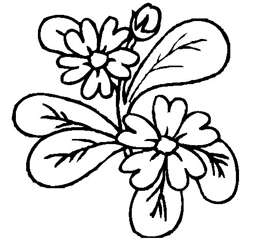 Dibujo de Flores 4a para Colorear