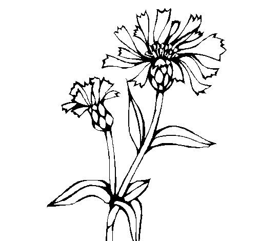 Dibujo de Flores de campo 1 para Colorear
