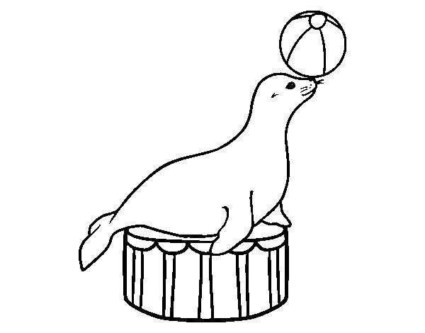 Dibujo de Foca equilibrista para Colorear