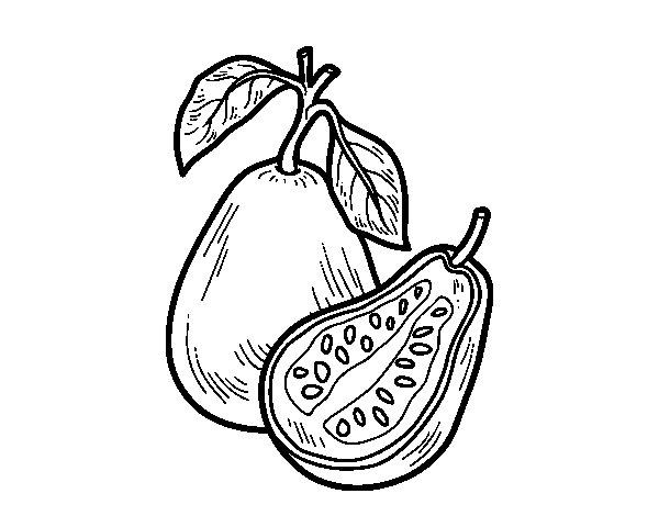 Dibujo de Fruta extica guayaba para Colorear  Dibujosnet