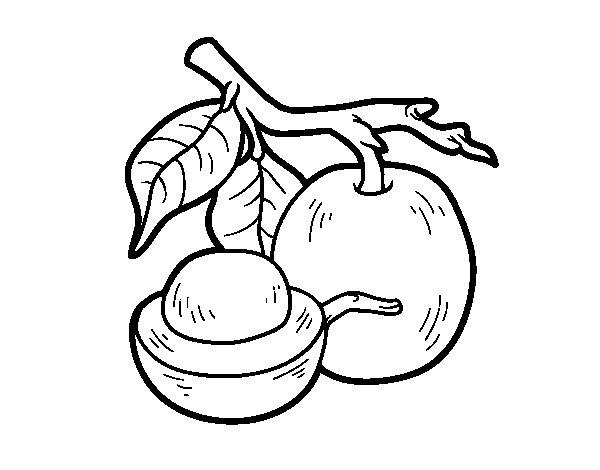 Dibujo de Fruta exótica ximenia para Colorear