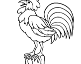 Dibujo de Gallo cantando