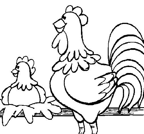 Dibujo de Gallo y gallina para Colorear