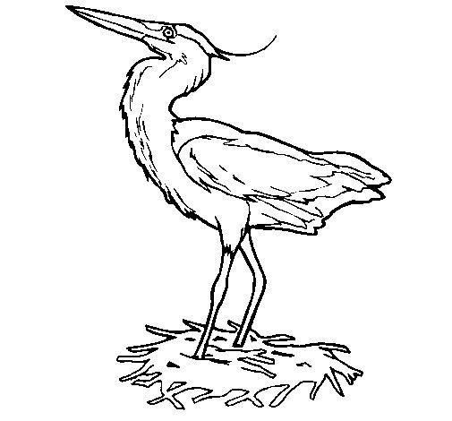 Dibujo de Garza real en su nido para Colorear
