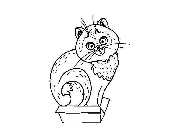 Dibujo de Gatito en una caja para Colorear