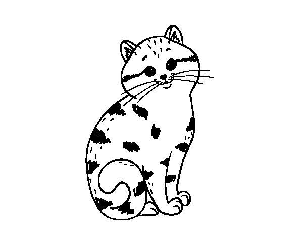 Dibujo de Gatito encantador para Colorear