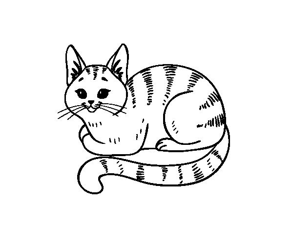 Dibujos De Gatos Dibujos Para Pintar Dibujo De Gato Para Colorear Y ...