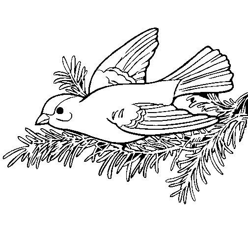 Dibujo de Golondrina para Colorear