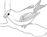 Dibujo de Gorrión en una rama para colorear