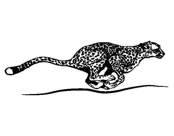 Dibujo Leopardo Para Colorear E Imprimir: Dibujo De Guepardo Corriendo Para Colorear