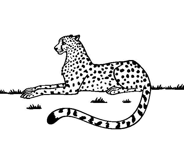 Dibujo de Guepardo en reposo para Colorear