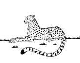 Dibujo de Guepardo en reposo
