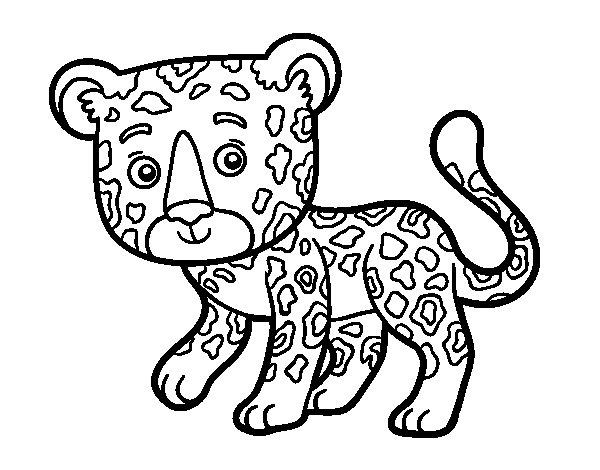 Dibujo de Guepardo joven para Colorear