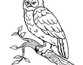 Dibujo de Lechuza para colorear