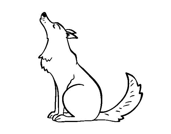 Dibujo de Lobo aullando para Colorear  Dibujosnet