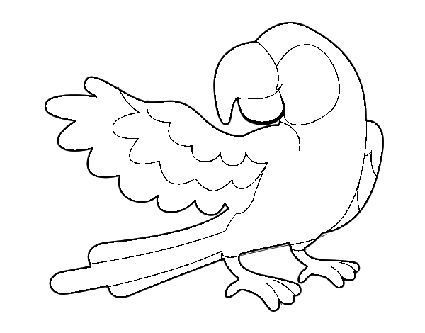 Dibujo de Loro con ala abierta para Colorear  Dibujosnet