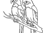 Dibujo de Loros para colorear