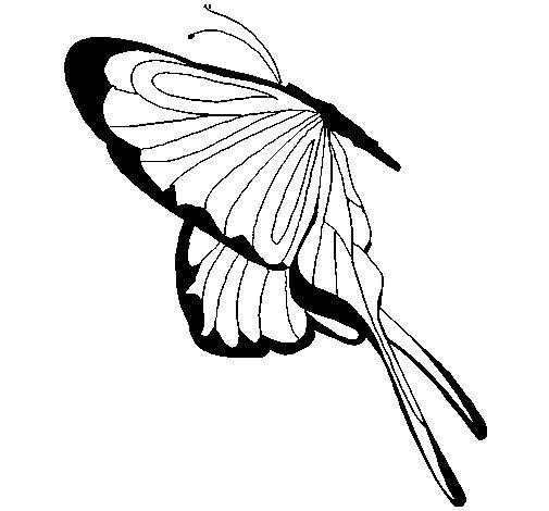 Dibujo de Mariposa con grandes alas para Colorear  Dibujosnet
