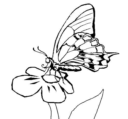 Dibujo de Mariposa en flor para Colorear
