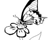 Dibujo de Mariposa en una flor para colorear