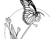 Dibujo de Mariposa en una rama para colorear