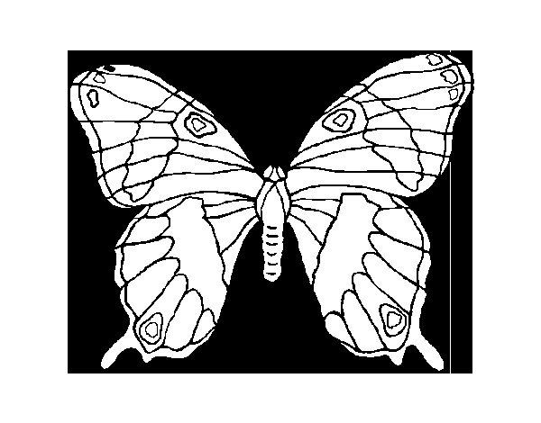Dibujo de Mariposa silvestre para Colorear