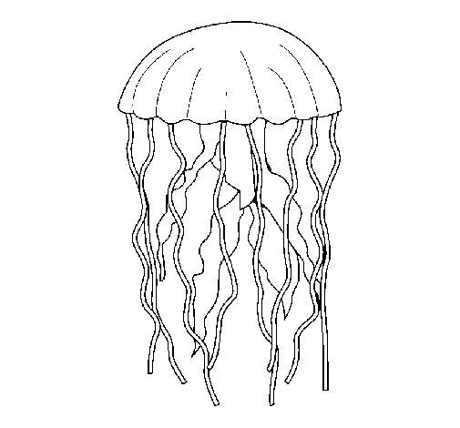 Dibujo de Medusa para Colorear  Dibujosnet