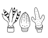 Dibujo de Mini cactus para colorear