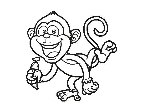 Dibujo de Mono capuchino para Colorear  Dibujosnet