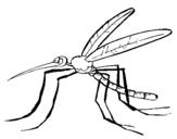 Dibujo de Mosquito 2